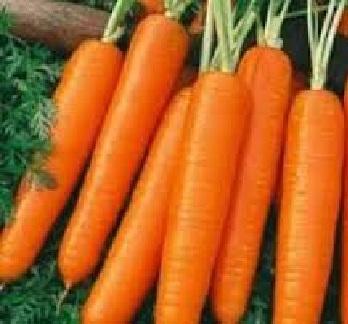 Σποροι Καρότο