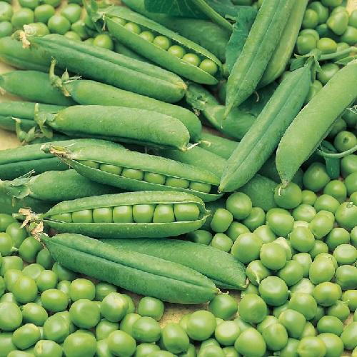 Σπόροι Αρακά